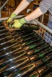 Le bottiglie di vino già riempite sono disposte in un contenitore di scheletro fotografia stock libera da diritti