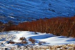 Le bouleau dans la neige Photographie stock