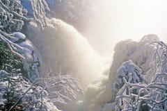 Le bouleau tombe en hiver Image stock