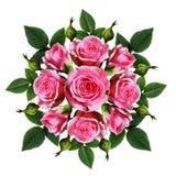 Le bouquet commandé de la rose de rose fleurit et bourgeonne Photographie stock