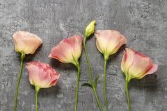 Le bouquet de l'eustoma rose fleurit sur le fond en pierre gris Photographie stock