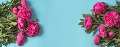 Le bouquet de la belle pivoine rose fleurit comme cadre sur le bleu en pastel ivre Copiez l'espace Vue supérieure Configuration p Image stock