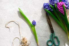 Le bouquet de la jacinthe fleurit des ciseaux rope au-dessus du backg en pierre blanc Image stock