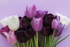 Le bouquet de pourpre, blanc colore des tulipes sur le fond violet Photo libre de droits