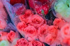 Le bouquet de roses fraîches avec de l'eau se laisse tomber en vente à la marque de fleur Photos stock