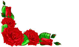 Le bouquet des roses rouges avec des feuilles et des bourgeons sur un backgro blanc Photo stock