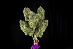 Le bouquet du cannabis frais fleurit la tension t de marijuana de Mangolope image libre de droits