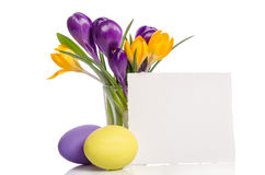 Le bouquet du crocus fleurit en vase et oeufs de pâques Images libres de droits