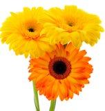 Le bouquet du Gerbera Photographie stock