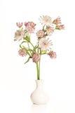 Le bouquet du grand masterwort fleurit dans un vase blanc à poterie sur a Photographie stock