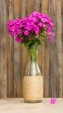 Le bouquet du phlox fleurit dans une bouteille en verre sur le fond de vieux panneaux de grange images libres de droits