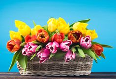 Le bouquet du ressort rouge, rose et jaune fleurit dans un panier en osier sur une table foncée en bois, fond bleu lumineux Images stock
