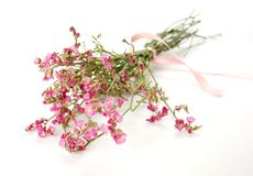 le bouquet fleurit peu rose Image libre de droits
