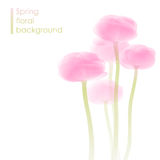 Fond de fleur de ressort Images stock