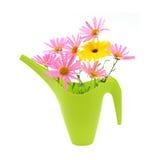 le bouquet peut arrosage de marguerites Photo stock