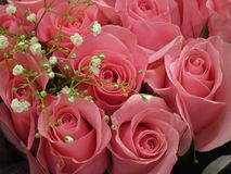 Le bouquet rose rose de Valentine captivant avec des souffles de bébé photographie stock libre de droits