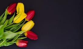 Le bouquet rouge et jaune de ressort frais de tulipe fleurit le macro de plan rapproché dans en bas à gauche le faisant le coin s images stock