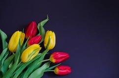 Le bouquet rouge et jaune de ressort frais de tulipe fleurit le macro de plan rapproché dans en bas à gauche le faisant le coin s photographie stock