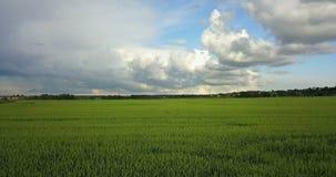 Le bourdon aérien a tiré au-dessus du grand champ de blé vert dans la perspective du ciel avec de beaux nuages dans le jour ensol clips vidéos