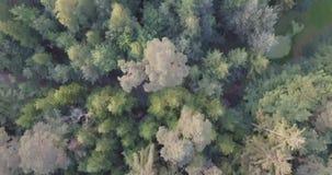 Le bourdon a tiré aérien directement en bas de la mouche de vue supérieure plus de mélangée à l'été clips vidéos