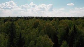 Le bourdon vole après les cimes d'arbre et les mouches au-dessus de la forêt clips vidéos