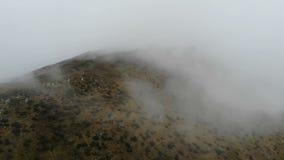 Le bourdon vole dans le ciel par le temps de brouillard - montagnes carpathiennes banque de vidéos