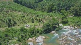 Le bourdon vole de Rocky River à la vaste plantation de banane par la jungle