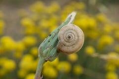Le bourgeon floral avec un escargot moulu blanc a collé haut étroit photographie stock libre de droits