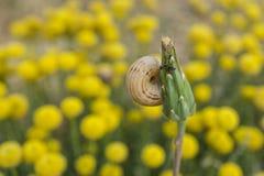 Le bourgeon floral avec un escargot moulu blanc a collé haut étroit images stock