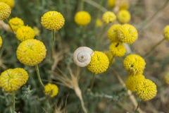 Le bourgeon floral avec un escargot moulu blanc a collé la vue supérieure images libres de droits