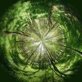 Le bout droit d'arbres vers le soleil Concept Photo stock