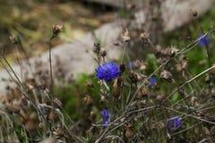 Le bout du bleuet d'automne photo stock