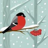 Le bouvreuil se reposent sur la branche du sorbe-arbre dans la forêt de neige d'hiver illustration libre de droits