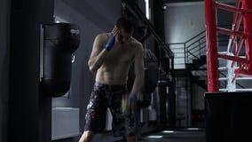 Le boxeur masculin forme la coordination avec de la balle de tennis banque de vidéos