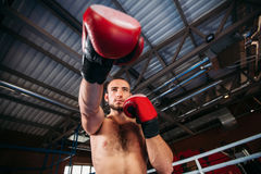 Le boxeur a pris le support Photo stock