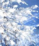 le branchement a couvert l'hiver de neige Photographie stock