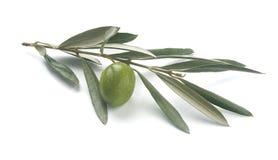 Le branchement d'olive Images stock