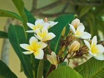 le branchement fleurit le blanc photo stock