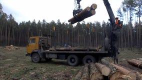 Le bras mécanique d'une écorce spécialisée enlevant la machine dépouille l'écorce d'un tronc d'arbre fraîchement coupé dans une f banque de vidéos
