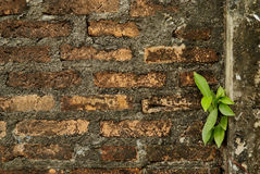 Le brickwall et l'arbre 1 Photographie stock