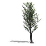 le broadleef 3d rendent l'arbre illustration de vecteur