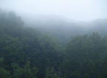 Le brouillard d'une forêt Image libre de droits