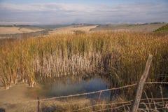 Le brouillard de début de la matinée forme une couche au-dessus des champs secs en Toscane Images libres de droits