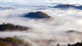 Le brouillard de matin dans les montagnes de forêt aménagent en parc, timelapse de Sri Lanka banque de vidéos