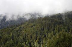 Le brouillard a enveloppé la forêt Photographie stock