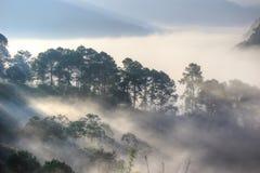 Le brouillard et le matin s'allument à la ferme de fraise sur Doi Ang Khang Image stock