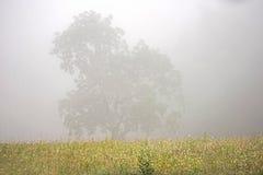Le brouillard plane au-dessus des herbes dans un domaine dans la crique de Cades photos stock