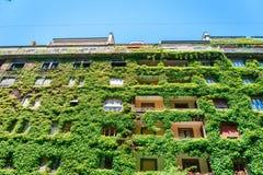 Le bâtiment vert a couvert le lierre Photographie stock libre de droits