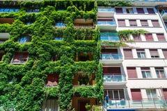 Le bâtiment vert a couvert le lierre Photo libre de droits