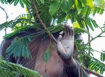 Le Buddha& x27 ; mains de s, bénédictions Image libre de droits